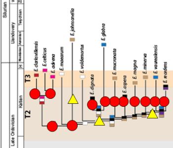 Phylogenetic biogeographic optimization for <i>Eochonetes</i>. Lam & Stigall, 2016.