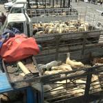 الحديدة ترفد الجبهات بقافلة غذائية في ذكرى ثورة 21 سبتمبر