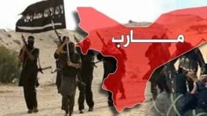 القاعدة مع اشتداد المعارك في مأرب