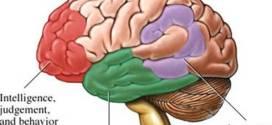 فيديو : كيف يدمر مرض الزهايمر الدماغ؟