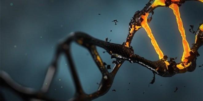 علماء يكتشفون اثنين من الجينات النادرة المسؤولة عن مرض ألزهايمر