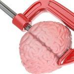 FOTOLIA Las conexiones del cerebro serían más importantes que el tamaño para determinar la inteligencia
