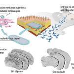 Prevención del Alzheimer a través del encapsulamiento celular.