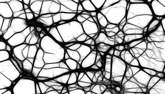 Neuronas - Neurogénesis