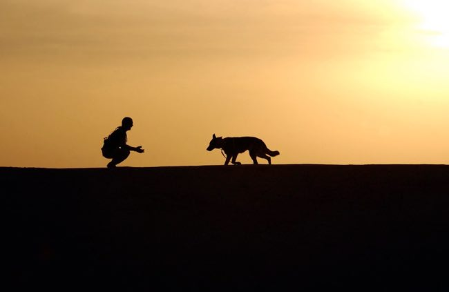 Terapia y Educación Asistida Con Animales (TEAAC)