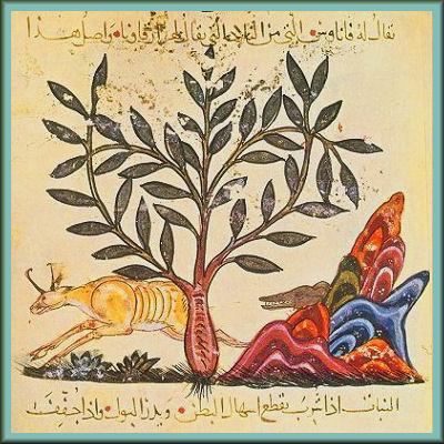 Dioscorides_astragalus_Illustration from De Materia Medica of Dioscorides Baghdad 1224