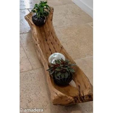 bois flotte de cactus deco