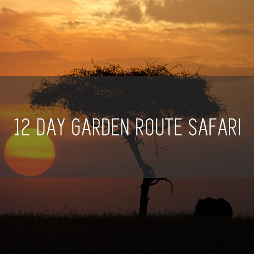 12 Day Garden Route Safari   Featured Image