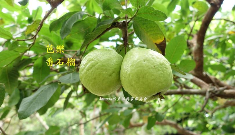 食材小知識-水果篇
