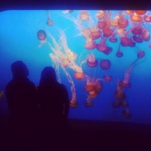Crazy jelly fish exhibit at Monterey Bay Aquarium