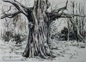 Savernake Oak