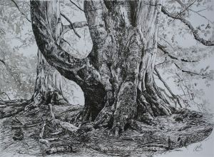 The Boar Tree – SOLD