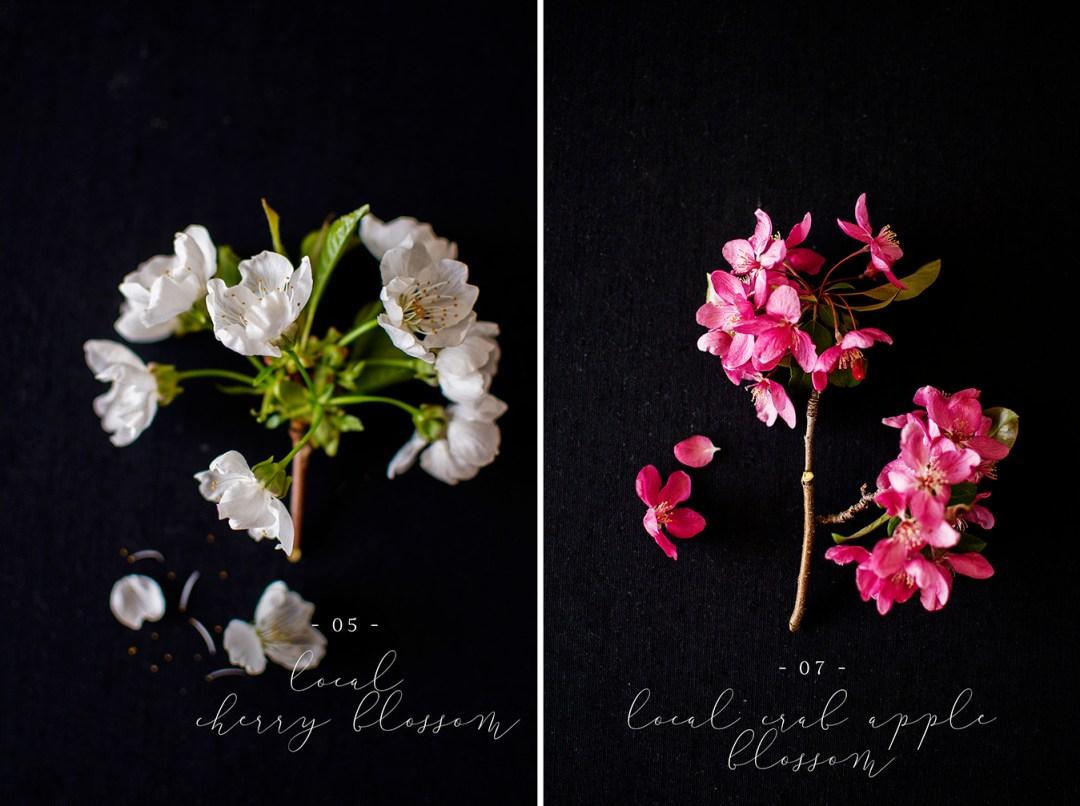Cherry blossom | crab apple blossom Flower flat lay