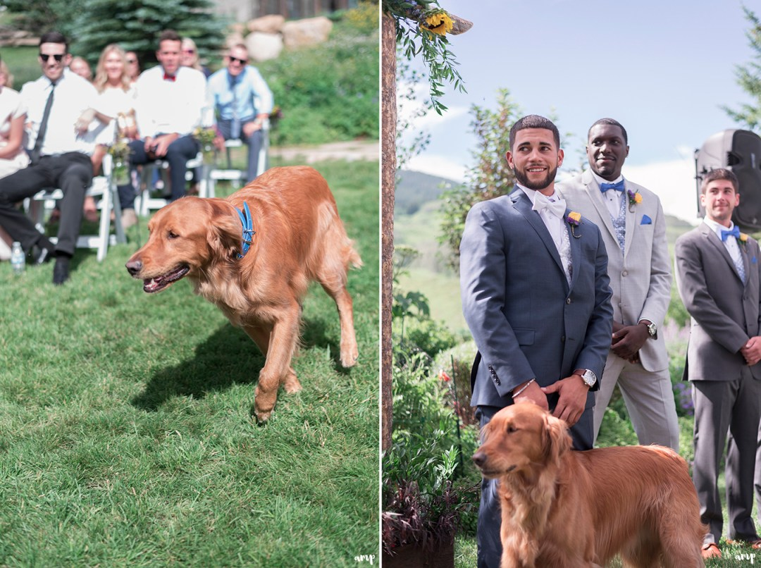 Bride and Groom's dog walking down aisle