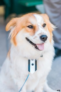 Including Your Dog in Your Wedding | amanda.matilda.photography