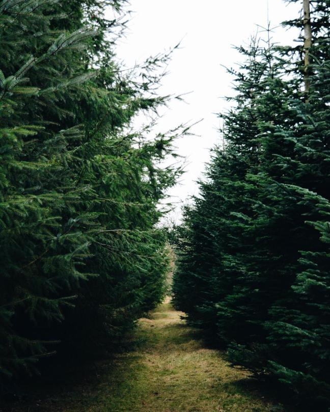 amandaricks.com/peaceway-of-evergreen-wisdom/
