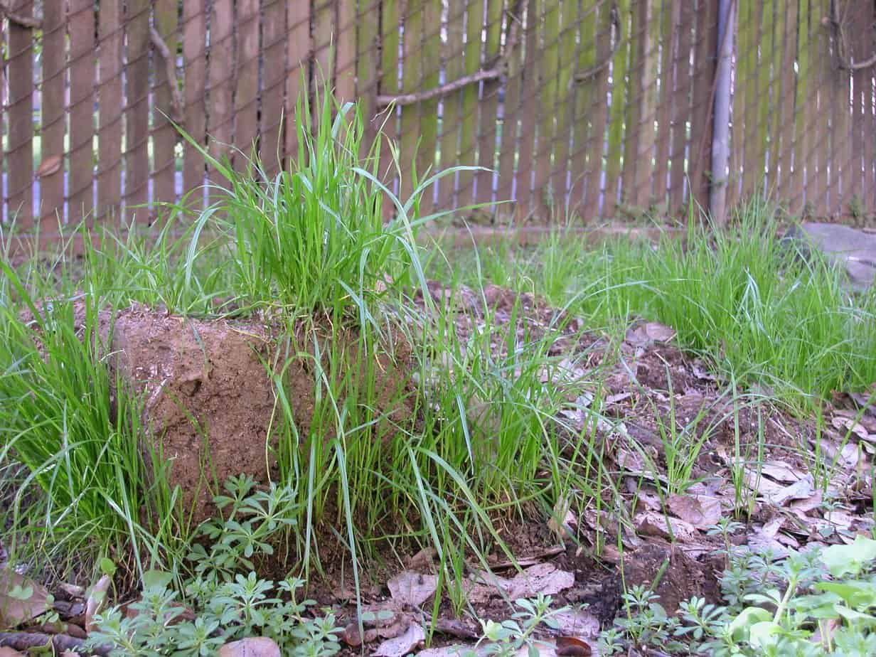 Green grass sprouting out of dirt blocks, taken outside.
