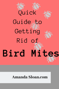 Quick Guide to Getting Rid of Bird Mites ⋆ Experiential Grace