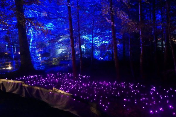 Fairy field at the Enchanted Forest