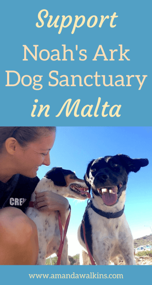 Volunteer to walk dogs any morning of the week at Noah's Ark Dog Sanctuary in Malta. Find out how!