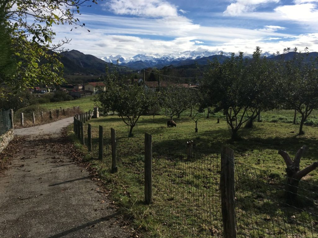 Views from Asturias Spain Amanda Walkins house and pet sitter