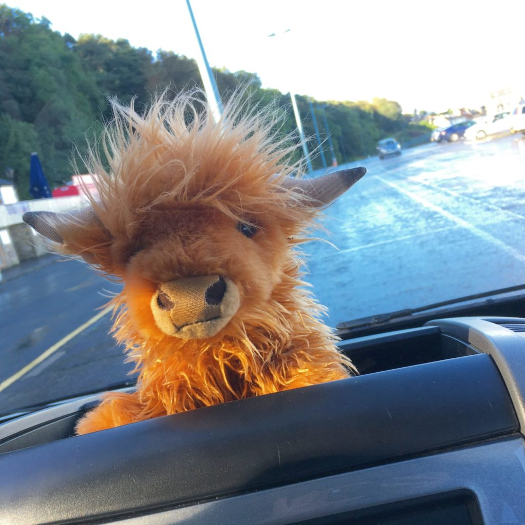 Small toy hairy highland cow called Kevin used by Rabbies tours in Scotland