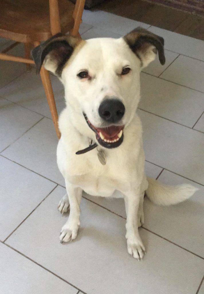 Romanian rescue dog TrustedHousesitters dog sitting