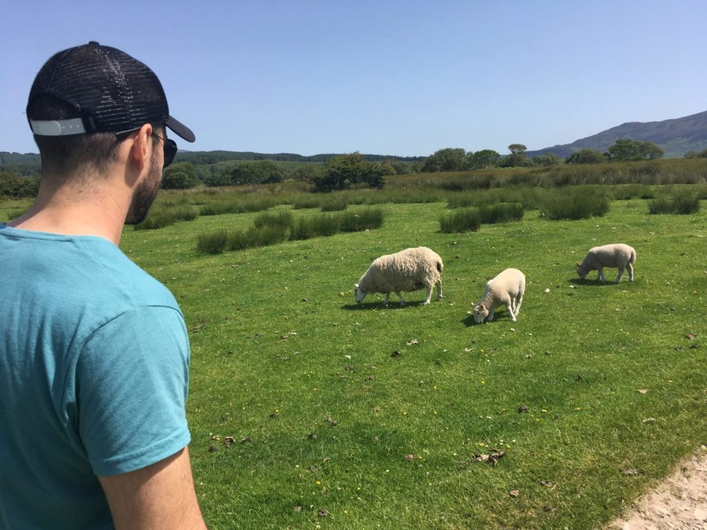 Jonathan Clarkin standing by watching some sheep grazing in a field
