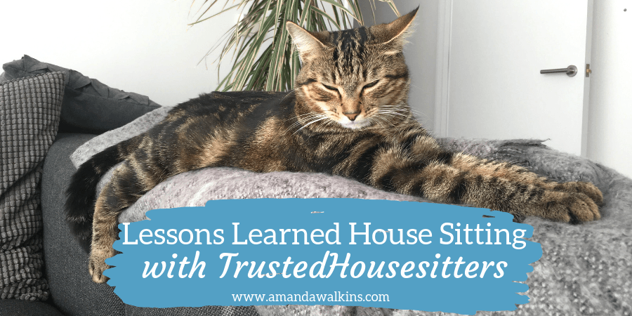 lessons learned house sitting with TrustedHousesitters and taking care of pets like this pretty cat