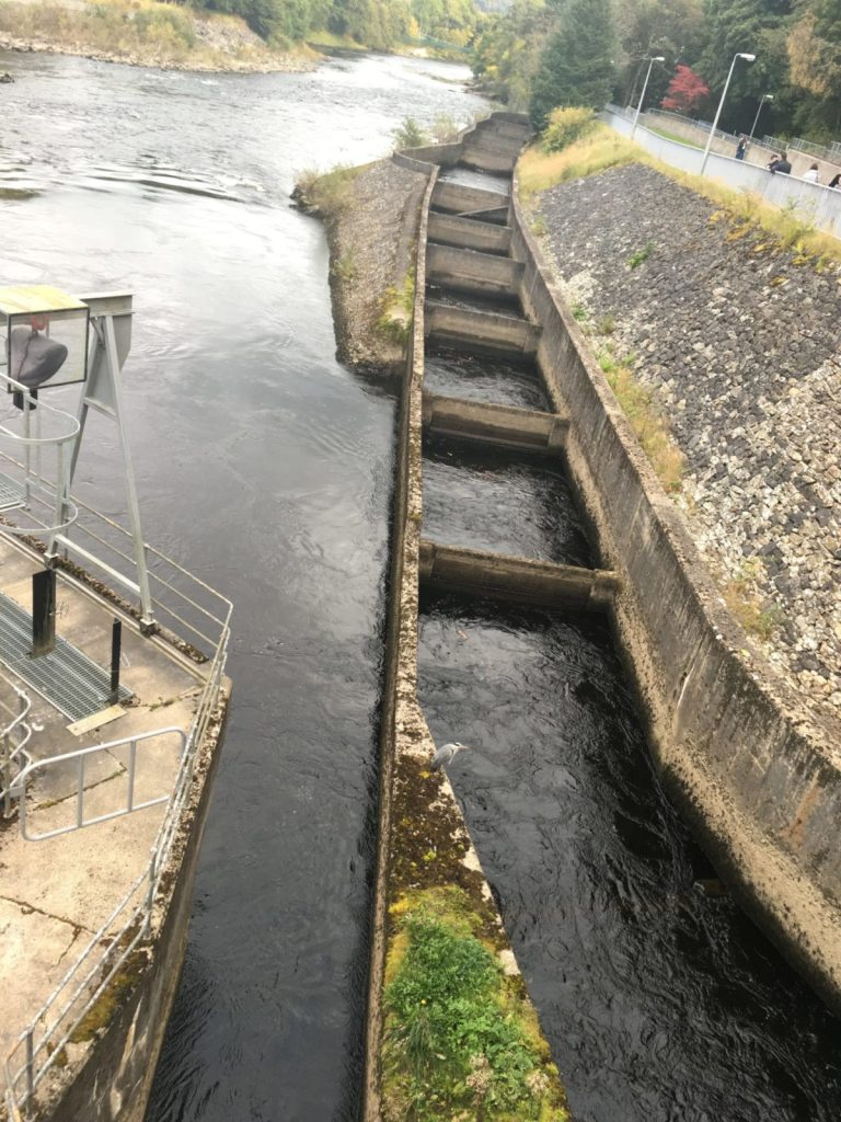 Things to do in Pitlochry include the fish ladder by the Pitlochry Dam