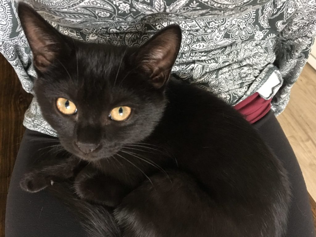 black kitten curled up on Amanda Walkins' lap
