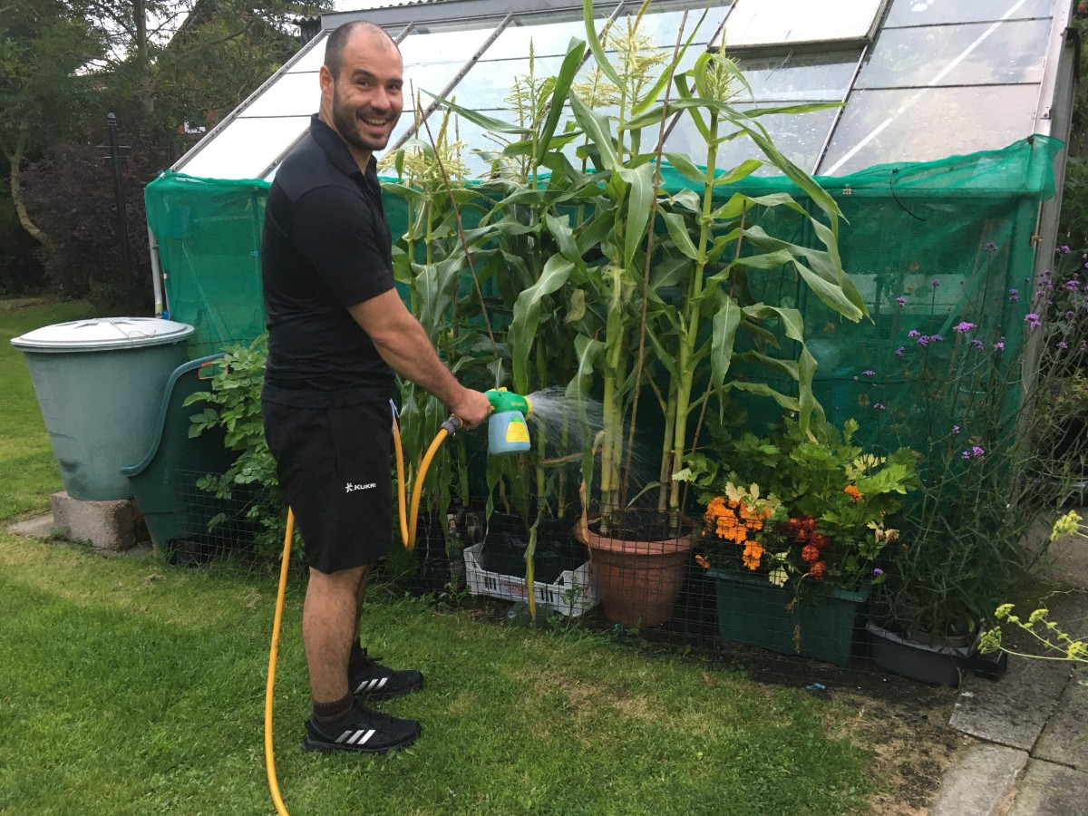Watering corn beside a greenhouse