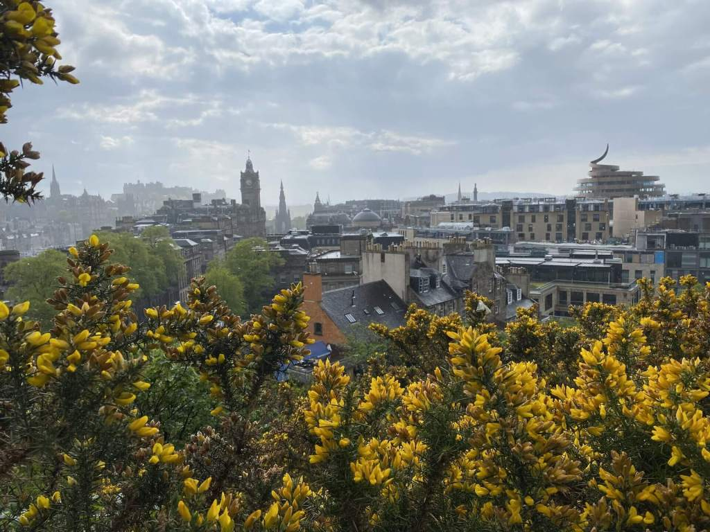 Edinburgh city skyline seen from Calton Hill, with yellow gorse filling the bottom of the frame