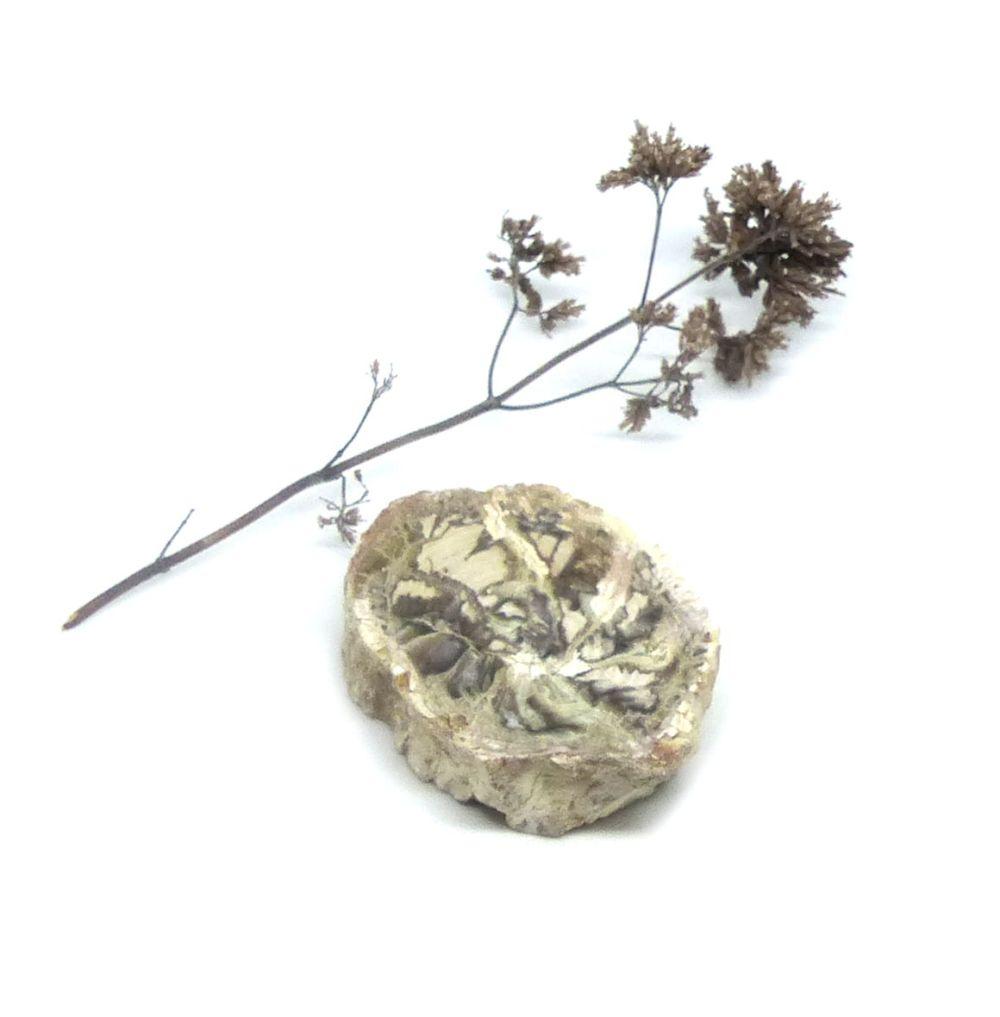 Tranche de bois fossile, modèle 2