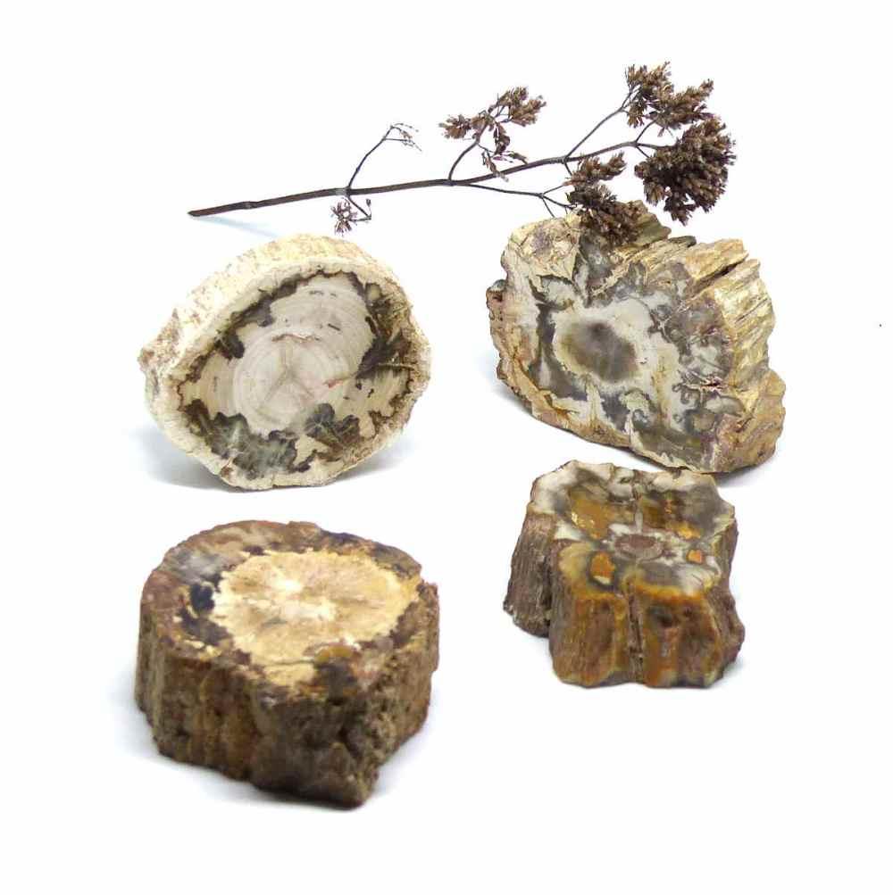 Sélection de tranche de bois fossile