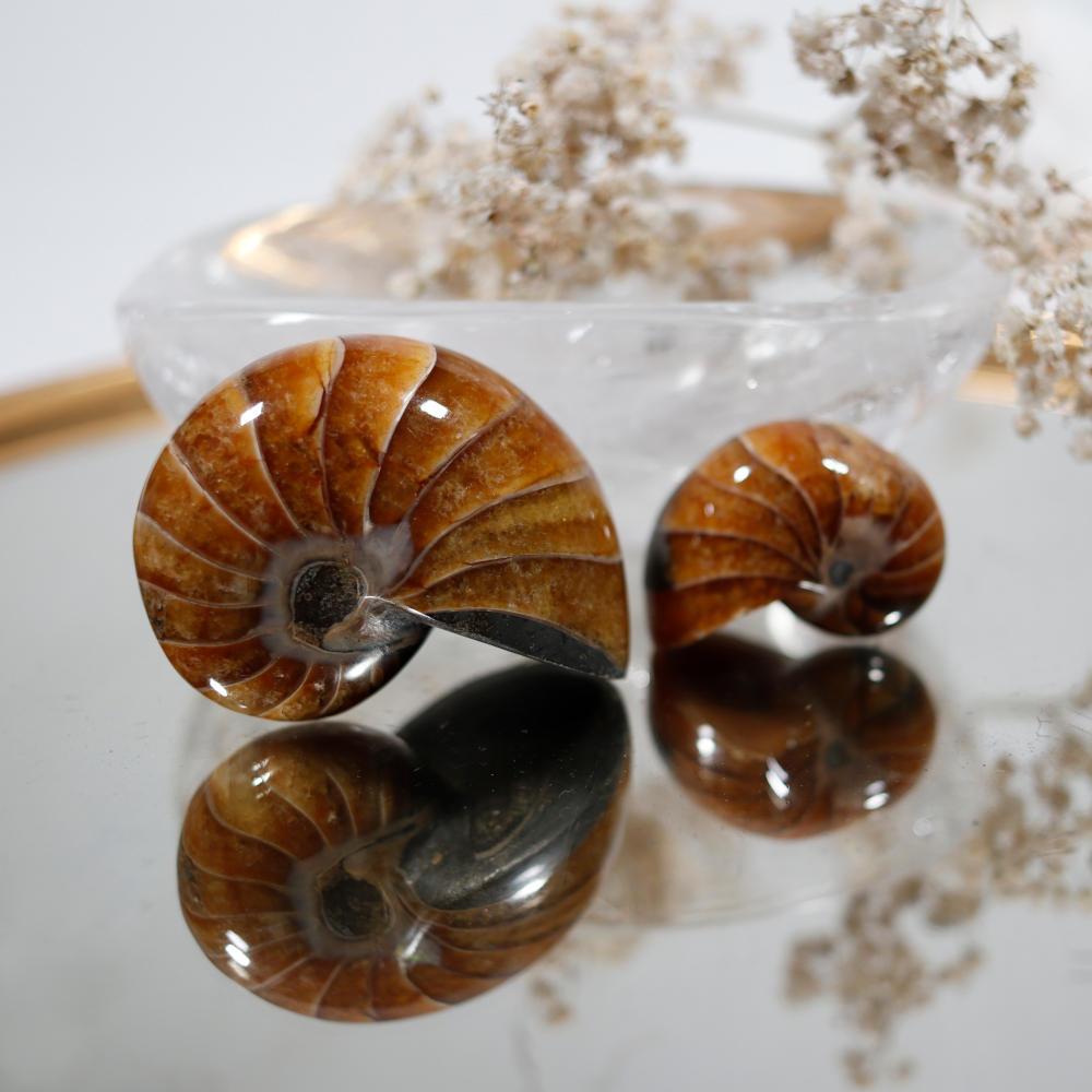Fossile, nautile
