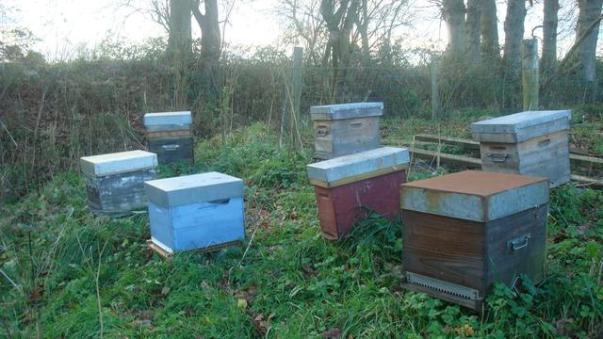 les-ruchers-de-florine-1