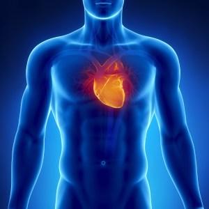 cardio musculation