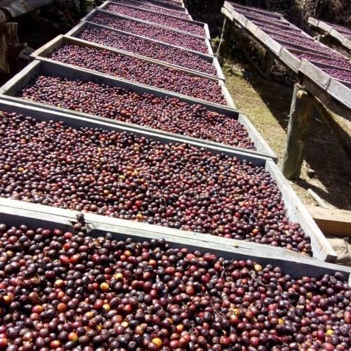 瓜地馬拉 鐵扇公主 咖啡豆(230g)