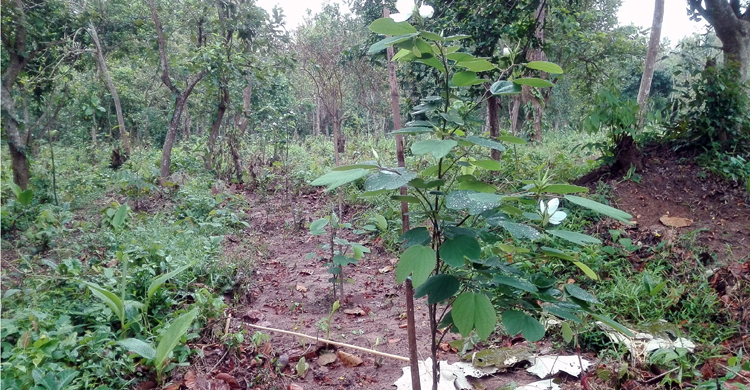 Forest-TangailNews-AmarTangail.jpg