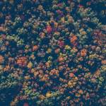 The season's ingredients: Autumn
