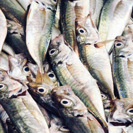 Porto fish seafood