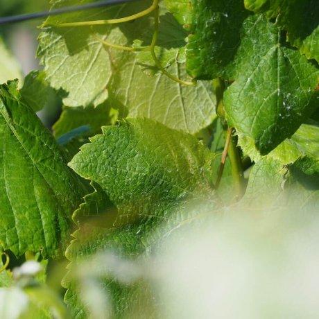 Portuguese natural wine class