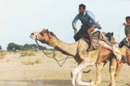 Camel-racers-Rajasthan