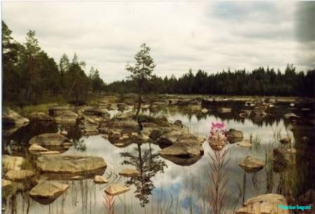 Almost surreal jewel of wetland and forest, repeated throughout Sweden