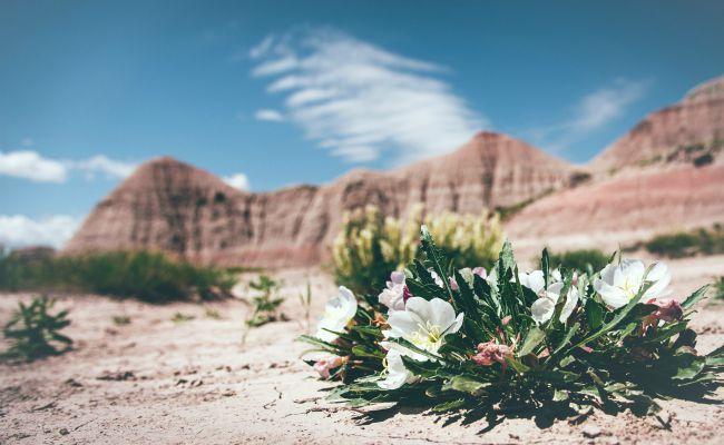 Deserts Will Blossom