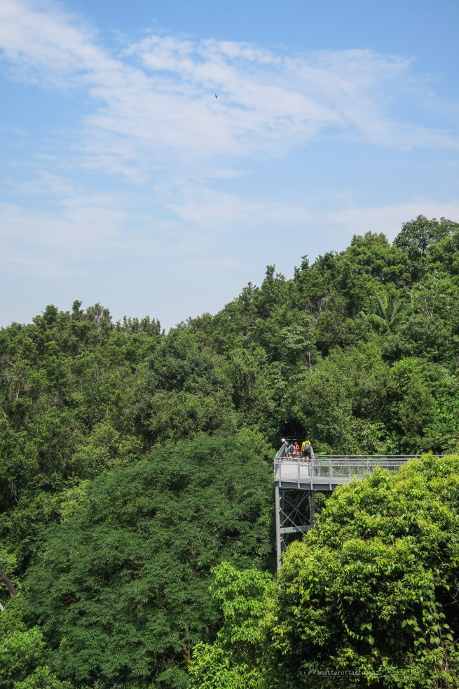 03-southern-ridges-forest-walk-canopy