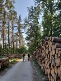 Cycling Czech Republic forest