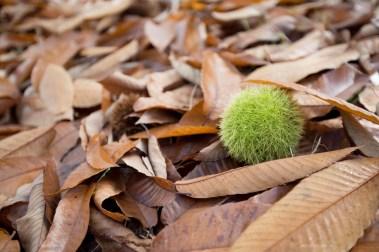 bright-wandiful-produce-chestnut-green
