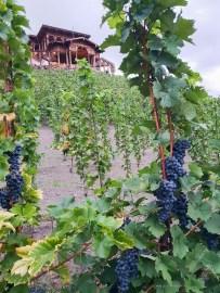 prague city winery